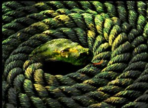 True Nonduality And Neo-Advaita - Moving Beyond A Cognitive Realization