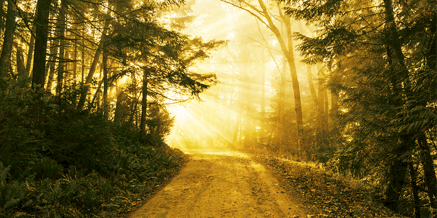spiritual coaching path in the woods